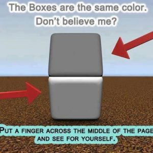 illusion optique Adelson